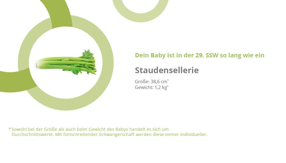 baby 29 ssw