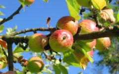 Apfelbrot-Rezept